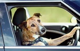 A driving dog is no MINI feat... or is it?